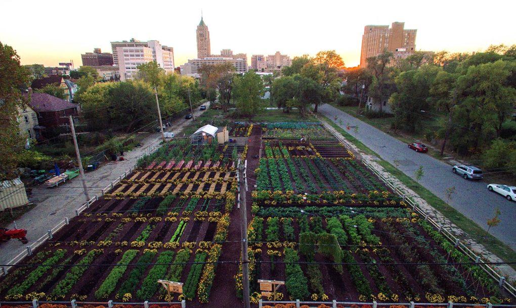 Agrihood - food cultivation